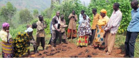 Farmers-in-Burundi-learn-ISFM-techniques.jpg