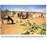 Water management in north Darfur