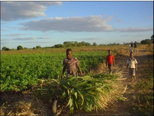 Coping with draught and climate change in Zimbabwe